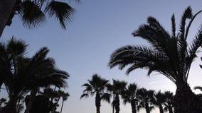 Siluetas de palmas contra el cielo de la puesta del sol del verano metrajes