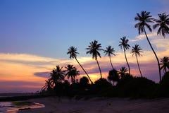 Siluetas de palmeras Imagen de archivo libre de regalías
