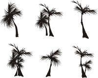 Siluetas de palmeras Imágenes de archivo libres de regalías