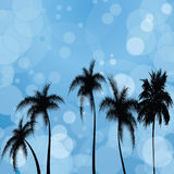 Siluetas de palmeras contra la perspectiva del patche solar Fotos de archivo libres de regalías
