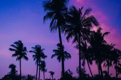 Siluetas de palmeras en el fondo del cielo azul de la tarde con puesta del sol en verano Foto de archivo