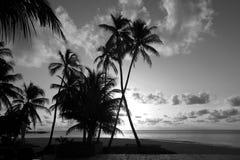 Siluetas de palmeras en la orilla en color blanco y negro imagenes de archivo