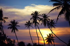 Siluetas de palmeras en la puesta del sol Fotos de archivo libres de regalías