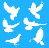 Siluetas de palomas Stock de ilustración
