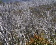 Siluetas de plata de árboles Imagen de archivo libre de regalías