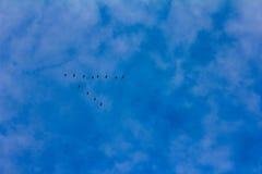 Siluetas de una cuña de volar los gansos salvajes que forman una flecha Fotografía de archivo