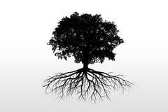 Siluetas del árbol Imagenes de archivo