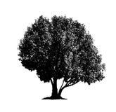 Siluetas 01 del árbol fotografía de archivo