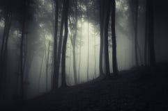 Siluetas del árbol en un bosque oscuro con niebla Imagen de archivo
