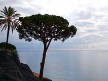 Siluetas del árbol y de la palma Imagenes de archivo
