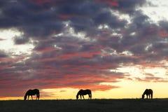 Siluetas del caballo Imagen de archivo libre de regalías