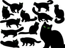 Siluetas del gato con los ojos. Imagen de archivo libre de regalías