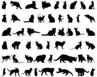 Siluetas del gato fijadas Fotografía de archivo