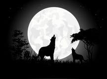 Siluetas del grito del lobo de la belleza con el fondo gigante de la luna Fotografía de archivo libre de regalías