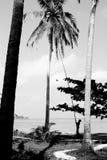 Siluetas del hombre que caen el coco de la palma Imagenes de archivo