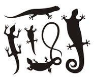 Siluetas del lagarto Fotografía de archivo libre de regalías