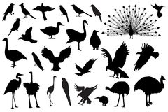 Siluetas del pájaro Imagen de archivo