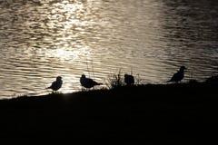 Siluetas del pájaro Foto de archivo libre de regalías