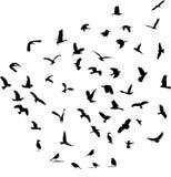 Siluetas del pájaro de la fauna fijadas Foto de archivo libre de regalías