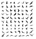 Siluetas del pájaro de la fauna fijadas Fotografía de archivo