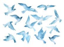 Siluetas del pájaro de vuelo con textura de la acuarela aisladas en el fondo blanco