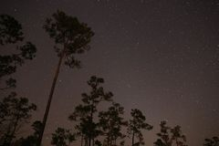 Siluetas del pino contra las estrellas Imagen de archivo libre de regalías