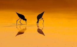 Siluetas del pájaro en salida del sol Imagen de archivo