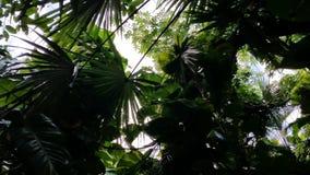 Siluetas del toldo de la selva Imagenes de archivo