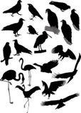 Siluetas del vector de pájaros Fotografía de archivo