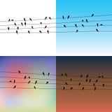 Siluetas del vector de pájaros en los alambres Imagen de archivo