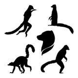 Siluetas del vector de un lémur Imagenes de archivo