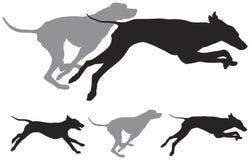 Siluetas del vector del funcionamiento de los perros de caza Fotografía de archivo