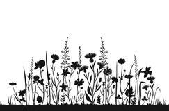 Siluetas del Wildflower Campo de la primavera de la hierba salvaje Fondo herbario del vector del verano ilustración del vector