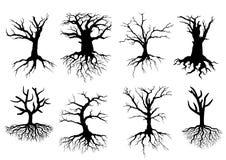 Siluetas desnudas del árbol con las raíces Imágenes de archivo libres de regalías