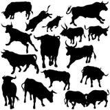 Siluetas determinadas de Bull Imagen de archivo libre de regalías