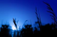 Siluetas en una puesta del sol. Foto de archivo libre de regalías