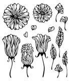 Siluetas florales aisladas en el fondo blanco ilustración del vector