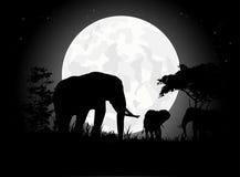 Siluetas hermosas de la familia del elefante con el fondo gigante de la luna Imagen de archivo