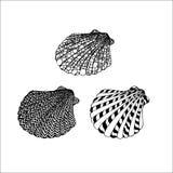 Siluetas lineares del negro del vector de conchas marinas en un backgrou blanco Fotos de archivo libres de regalías