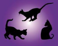 Siluetas negras de gatos Imagen de archivo libre de regalías