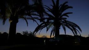 Siluetas negras de las palmeras en el fondo del cielo de la puesta del sol Vista magnífica de la puesta del sol en amarillo y azu almacen de metraje de vídeo