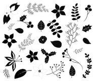 Siluetas negras del follaje del invierno con las flores, hojas, ramas Foto de archivo libre de regalías