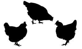 Siluetas negras realistas determinadas que colocan y que picotean las gallinas aisladas en el fondo blanco Foto de archivo