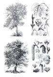 Siluetas retras del vintage de los árboles de montaña de un arce y del álamo temblón Fotografía de archivo
