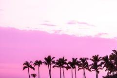 Siluetas rosadas brillantes de la palmera Imágenes de archivo libres de regalías
