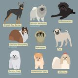 Siluetas simples de perros Mini-perros en diseño plano Fotos de archivo
