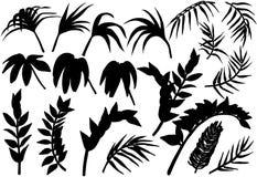 Siluetas tropicales de las plantas de la selva de la palma fijadas Fotografía de archivo