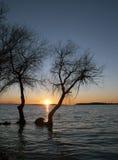 Siluetas y puesta del sol de los árboles Imagenes de archivo