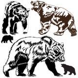 Siluetea osos marrones Fotografía de archivo