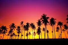 Silueteado de árbol de coco Foto de archivo libre de regalías